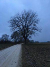 Grauer Wintertag